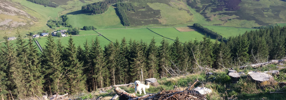 Walks in Cademuir forest with the dog