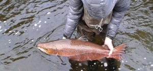 Salmon And Trout Fishing On The Tweed